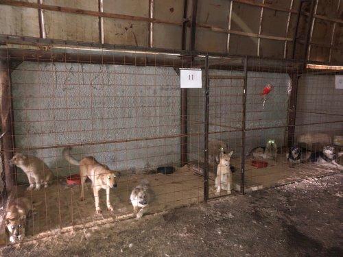 На территории муниципального приюта побывали зоозащитники
