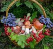 22 августа в селе Колва будет организована сельскохозяйственная ярмарка