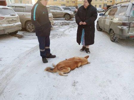 В Усинске появился догхантер с ружьем