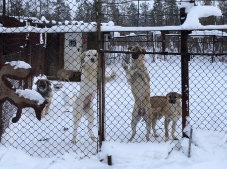 В Усинске расширят приют для собак
