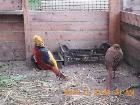 Как зооволонтер из Пармы ставит на крыло диких пернатых