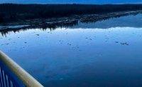 Прокуратура организовала проверку в связи с нефтеразливом на реке Колве в Усинском районе