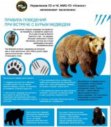 Будьте готовы к встрече с медведем