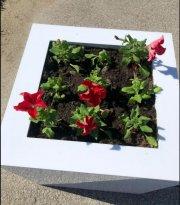 В Усинске высажены цветы в клумбах