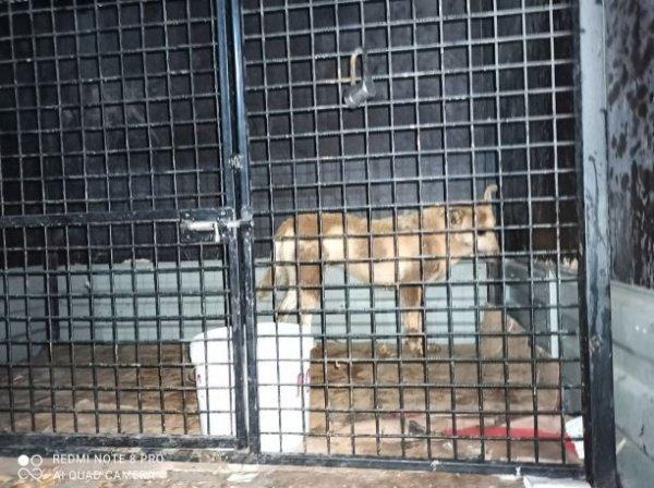 В Усинске зоозащитники «заарканили» дикую собаку