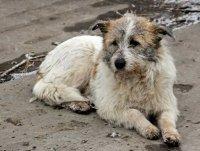 Жители Усинска могут по телефону сообщить о месте нахождения животных без владельцев